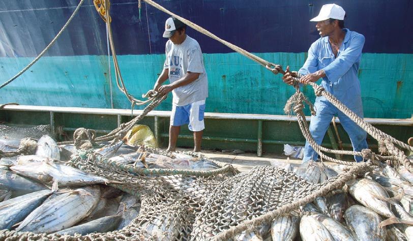 'El Niño' Can Impact Tuna Catches in the Pacific