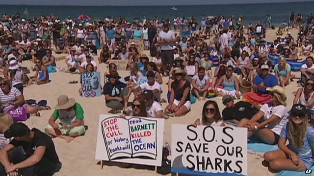 Australia's Plan to Kill Sharks Will Affect Marine Ecosystem, Protesters Say
