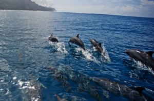 The waters around the Solomon Islands are teaming with dolphin, corals, and reef fish. (Photo by ©James Morgan/CTI-CFF)