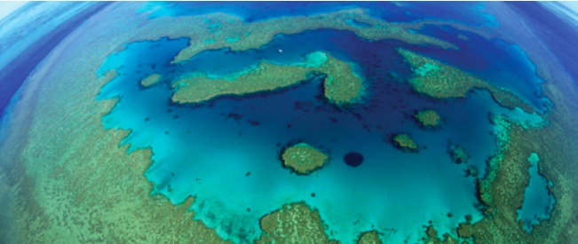 Overall Outlook for the Great Barrier Reef Poor, 'in Worst State Since Records Began'