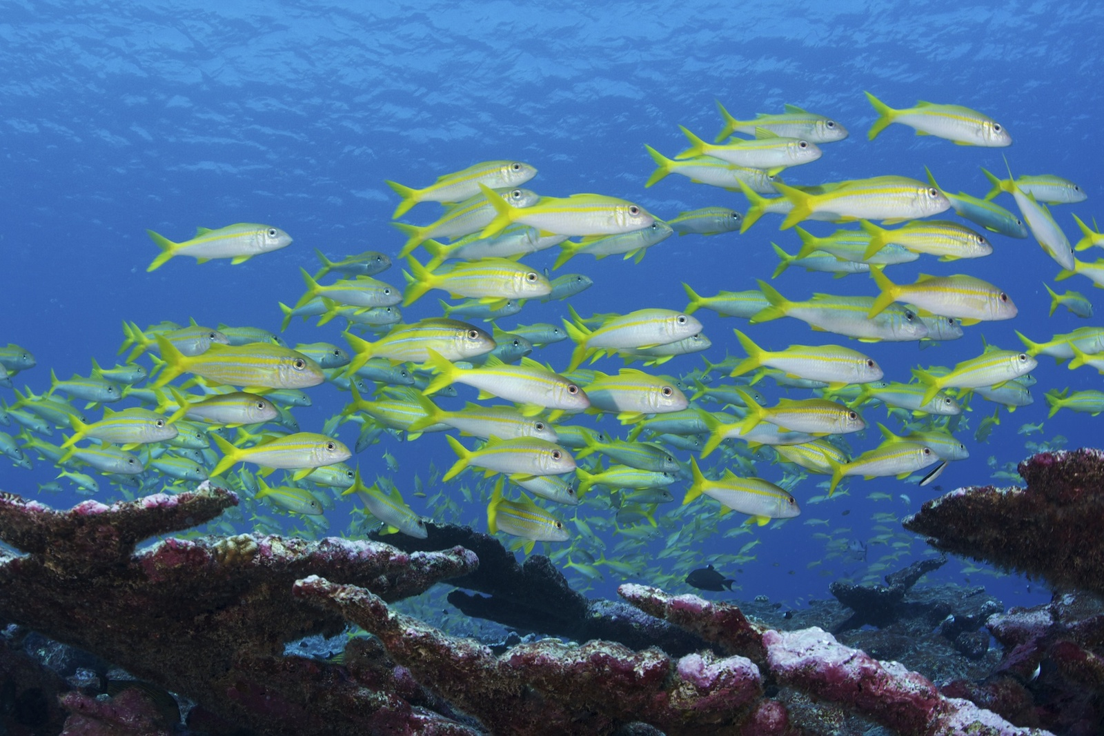 Conservation International Completes Funding to Protect 6.7 Million sq. km. of the Pacific Ocean