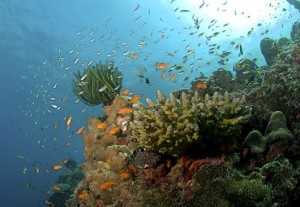 Reef stricken: corals, fisheries and tourism will all be damaged by ocean acidification. (Photo by: Ritiks via Wikimedia Commons)
