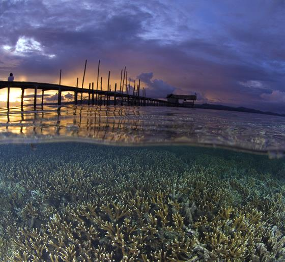 Safeguarding the Future of Nature and People in the Coral Triangle Through Marine Protection