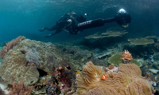 Coral Triangle Could be Last Bastion for Planet's Beleaguered Reefs