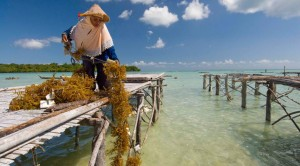 In Wakatobi, Indonesia, training programs are providing local communities with access to a stable source of household income allowing the unique marine biodiversity that characterizes this area to flourish. (Photo from: The Nature Conservancy)