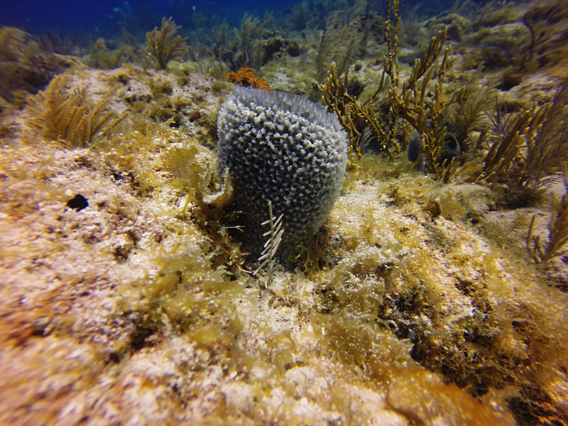 Why Corals Are Losing the War Against Sponges