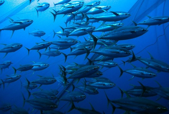 Bolstering Regional Management for Sustainable Tuna Fisheries — ISSF