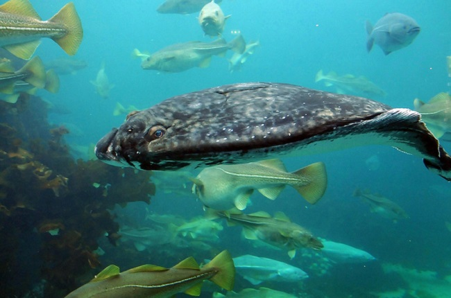 Climate Change Triggers Threat to Marine Ecosystems