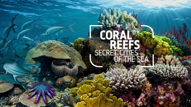 Natural History Museum of London to open new 'Coral Reef: Secret Cities of the Sea'