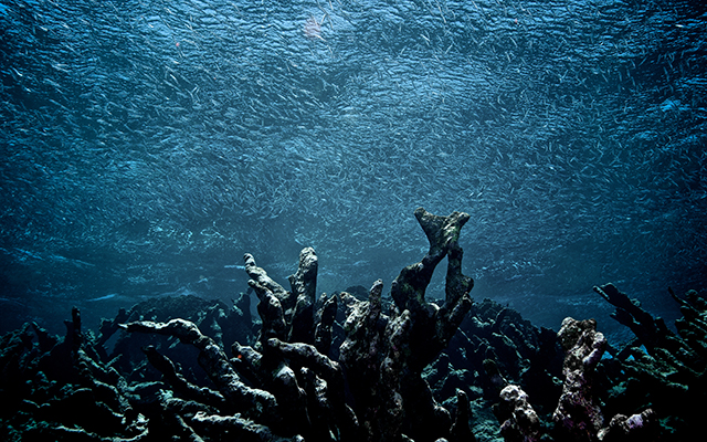 """The """"Mega-Drought Future,"""" the Disappearance of Coral Reefs and the Unwillingness to Listen"""