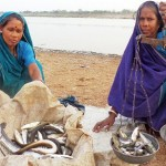 Women weighing riverine fish catch, India. (Photo by: Lalit Tyagi)