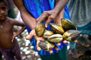 One of the goals of the Women in Conservation committees in Manus is to increase clam production by improving the health of the mangrove stands. (Photo by: USAID CTSP / Tory Read)
