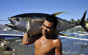 After a hard night's work, a fisherman in Mindoro proudly returns with a 43-kilogramme Yellowfin Tuna (Thunnus albacares). Fish of the highest quality are destined for western markets. (WWF-Philippines / Gregg Yan)