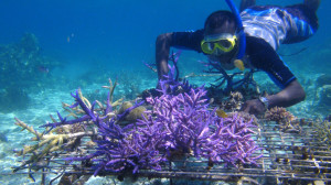 Rural coral farming project in Western Province, Solomon Islands. (Photo by: Wade Fairley/WorldFish)