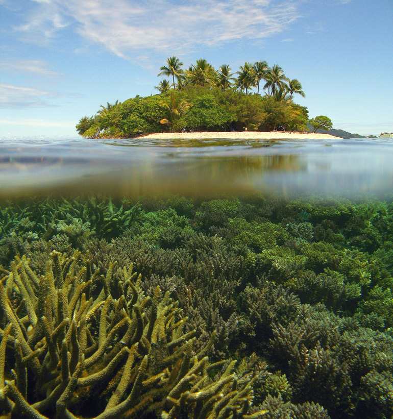 Diseases Loom Large for Tropical Corals