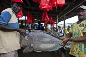 These fishermen sell their artisanal catch at the public market on Ghizo Island. The waters of the Solomon Islands are rich in biodiversity, boasting 1019 species of reef fish. (Photo by: ©James Morgan/CTI-CFF)