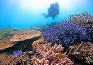 Line Bay, of the Australian Institute of Marine Science, surveys temperature-tolerant corals in the Far Northern Great Barrier Reef. (Photo courtesy of: Ray Berkelmans)