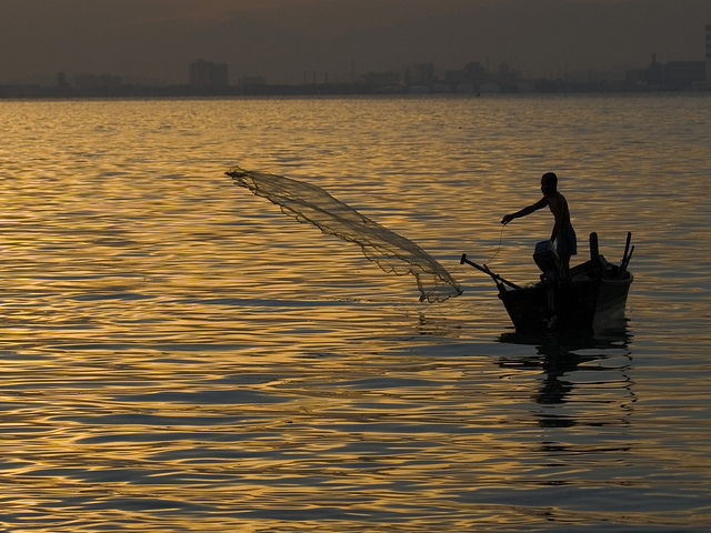 Too Warm, Too Few Fish: Health Warning for World's Oceans