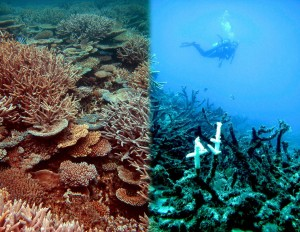 The left side of this photo shows a healthy reef at Heron Island. The right side shows an example of a degraded reef off Townsville after attack from Crown of Thorns and bleaching. (Photo from: EurekaAlert.org)