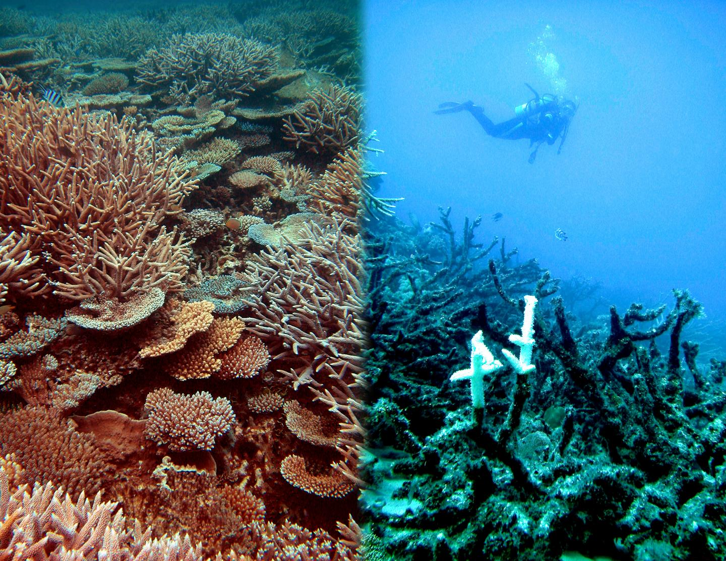 Coral Reefs Doomed Even if Climate Conference is Successful