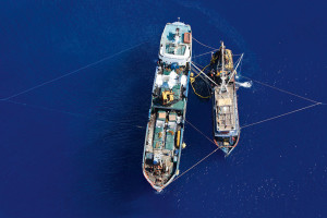 Transshipment is typical of IUU fishing. As seen here off the coast of Indonesia, smaller fishing vessels transfer their illegally caught fish onto larger refrigerated transport ships (reefers). The fishing vessels are restocked with fuel and supplies at the same time, enabling them to remain at sea for many months. (Photo from: World Ocean Review, by © Alex Hafford/AFP)