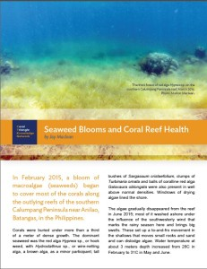 Seaweed-Blooms-and-Coral-Reef-Care