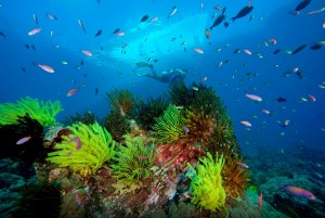 Local coral and sea life, Papua New Guinea. (Photo by: Jurgen Freund/WWF.)