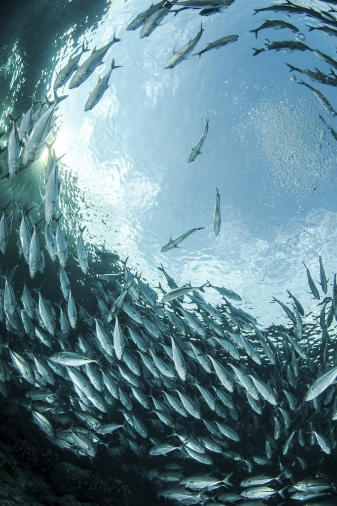 New Study Underscores Urgency to Rebuild Global Fisheries – EDF