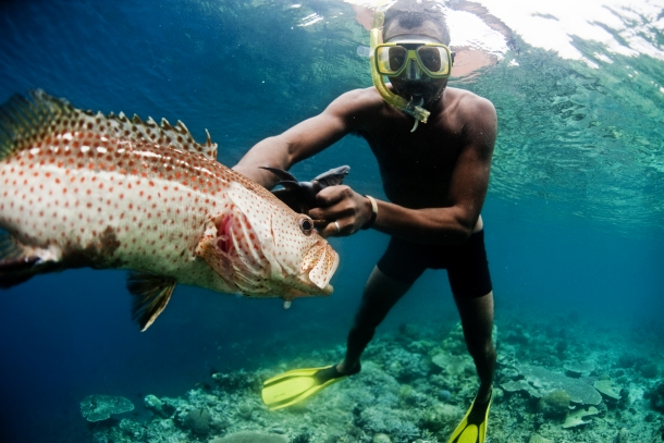 Study Identifies Most Vulnerable Tropical Reef Fish