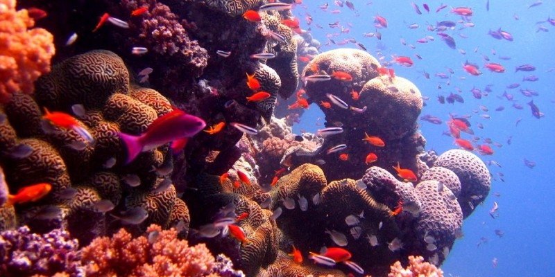 Acid Test Shows Real Threat to Coral Reefs