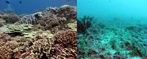 A pristine reef alongside a fleshy algae-dominated reef in the central Pacific.
