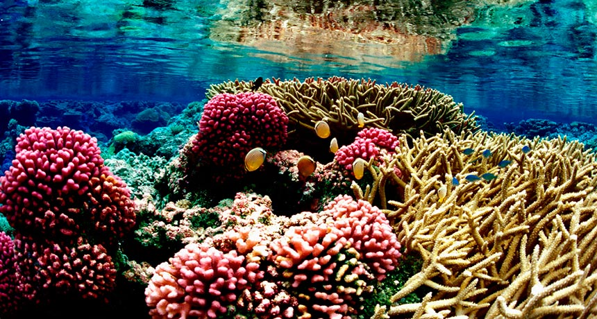 Protected Coral Reefs May Not Be the Ones That Need Protection