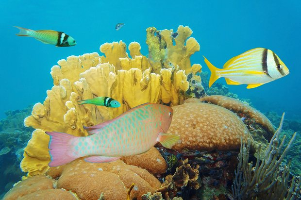 Limiting Catch of One Type of Fish Could Help Save Coral Reefs, Research Finds