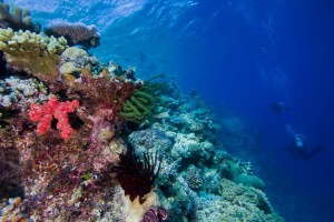 Coral reefs such as the Great Barrier Reef (shown here) are extremely species-rich habitats. (Photo by: Simon Gingins)