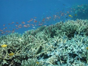 A coral reef in Komodo National Park in Eastern Indonesia. (Photo by: Michael Lesser, University of New Hampshire)