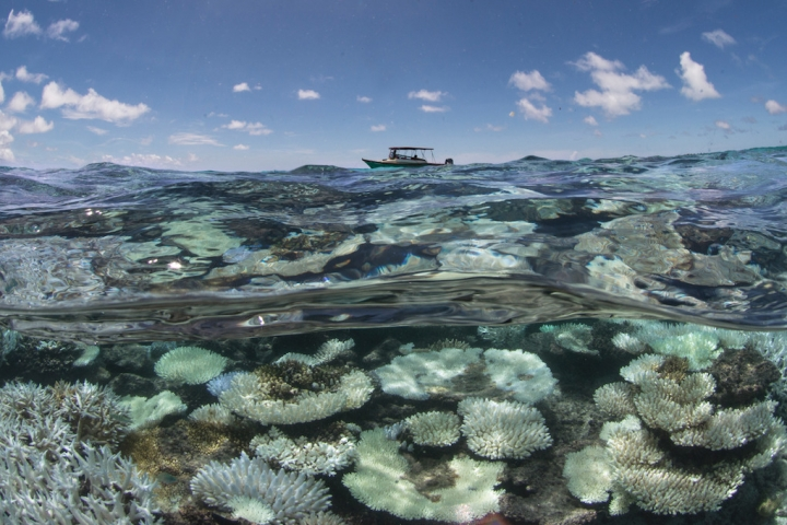 Scientists surveying coral bleaching in the Maldives in May 2016. (Photo from: XL Catlin Seaview Survey)
