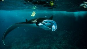 Let's Keep Plastic Out of the Coral Triangle