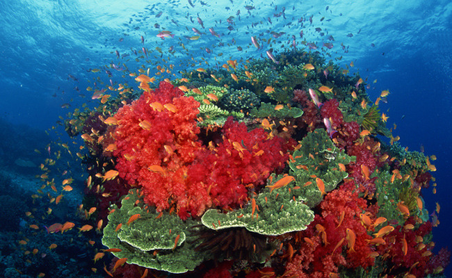 Climate Change Threatens These 5 Important Coral Reefs