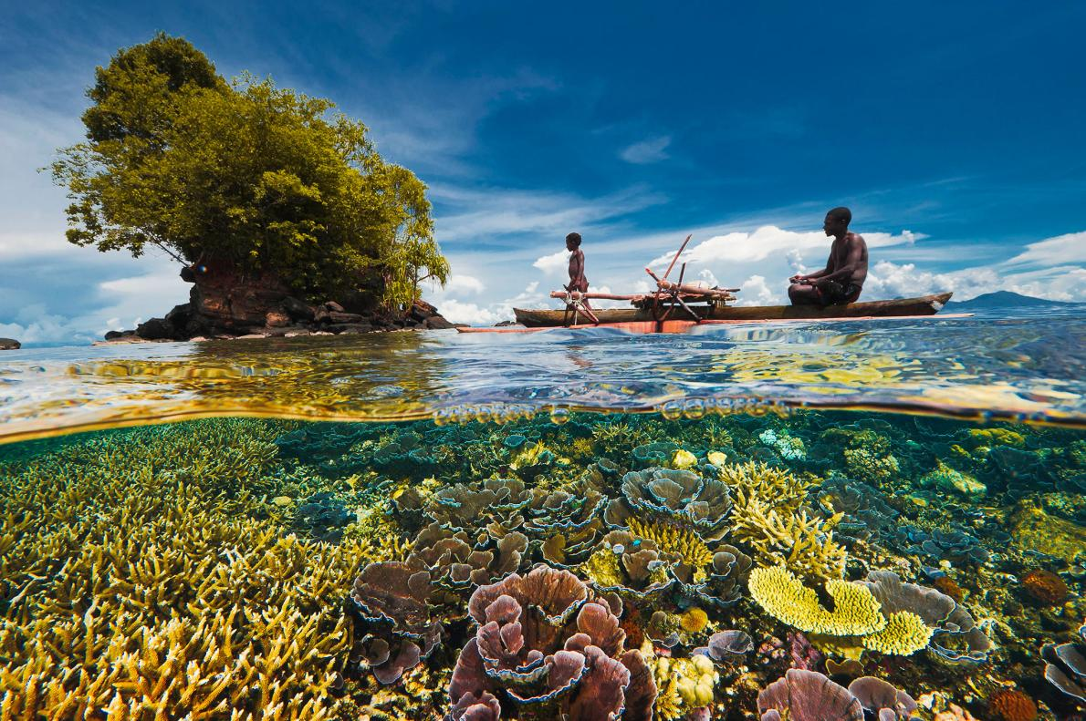 Coral Reefs Doing Better Than Expected in Many Areas