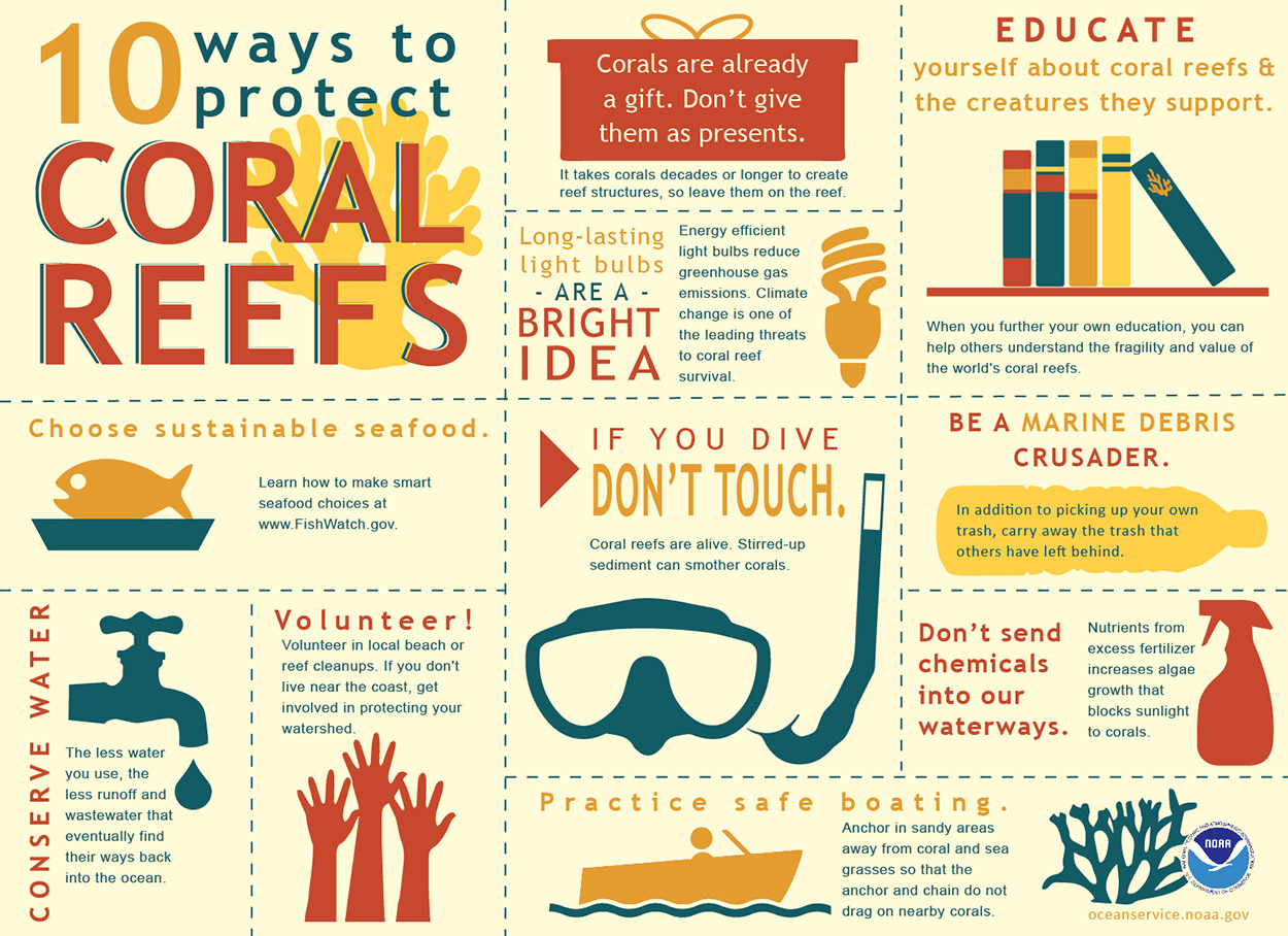 What can I do to protect coral reefs?