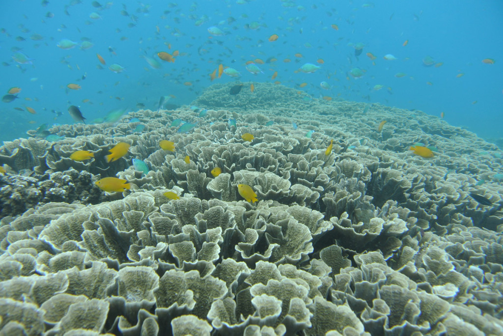 A reef off the coast of Bali, Indonesia. (Photo by: CORAL staff)