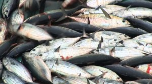 110916-illegal-fishing-in-pacific-800x445