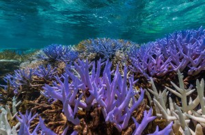 View 360º Images of coral reefs here. (Photo by: XL Caitlin Seaview Survey)