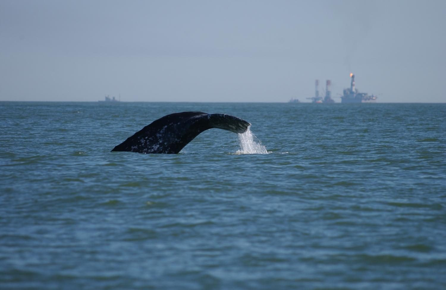 New IUCN Guide Helps Navigate Seismic Survey Impacts on Marine Species