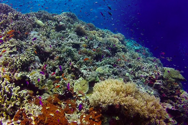 Coral Regrowth is New Crusade