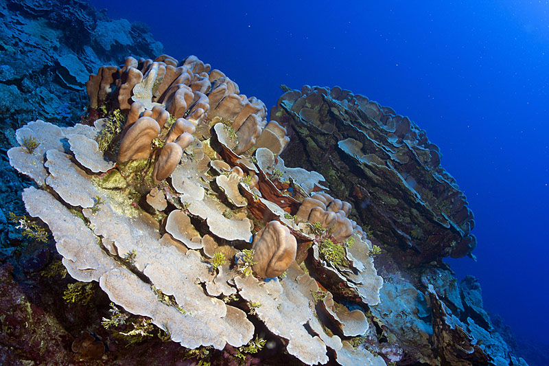 Cousteau Calls for Protection of Benham Rise for Future Generation