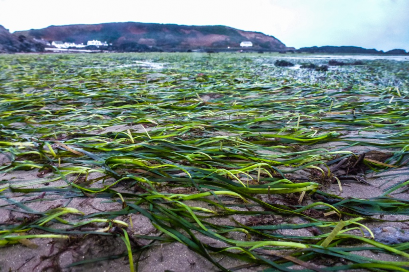 Protecting the Little-Known Seagrass 'Meadows'