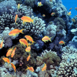 gulf_of_eilat_red_sea_coral_reefs-e1478270459792