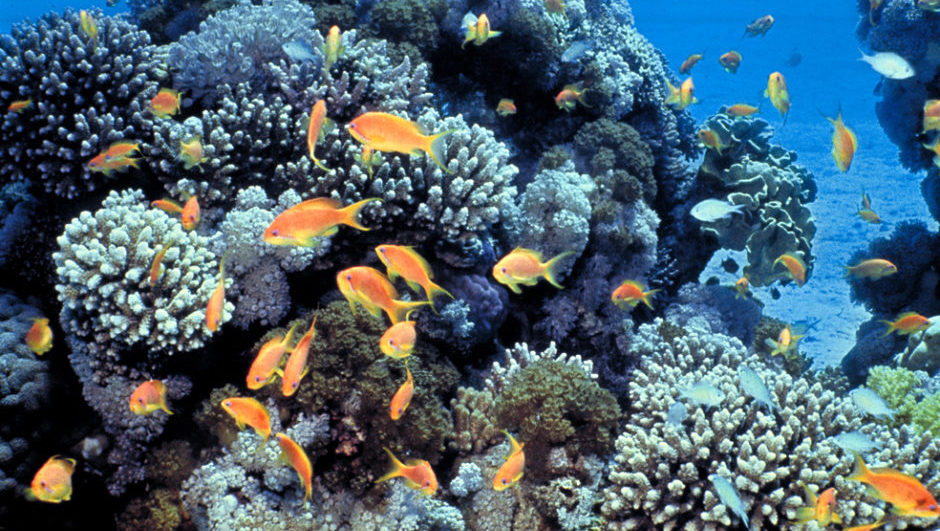 How Technology Is Saving The World's Coral Reefs