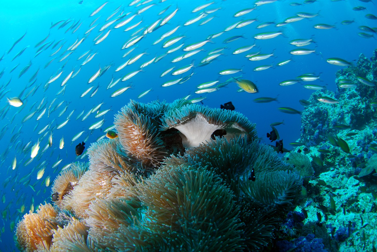 Why Degraded Reefs Could be the Future of Ocean Conservation